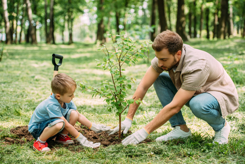 Father and son planting a tree in their backyard